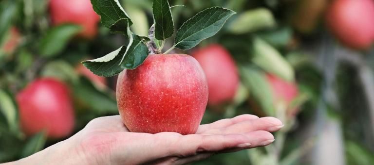 Obsthof Brunsiek Blomberg Apfel