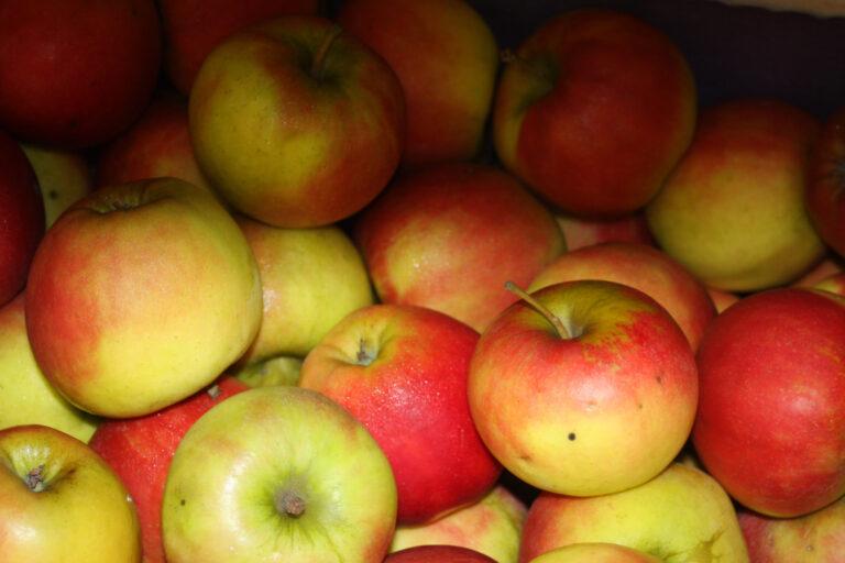 Obsthof Brunsiek Blomberg Äpfel